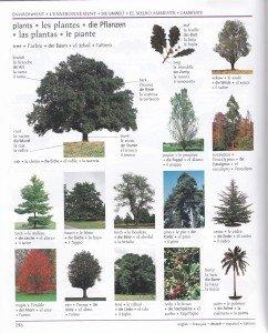 Les plantes 1