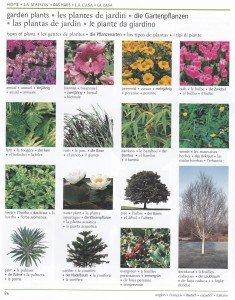 Les plantes de jardin 1